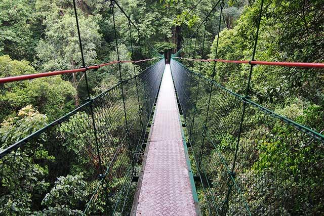 Canopy Trail TNGGP Cibodas