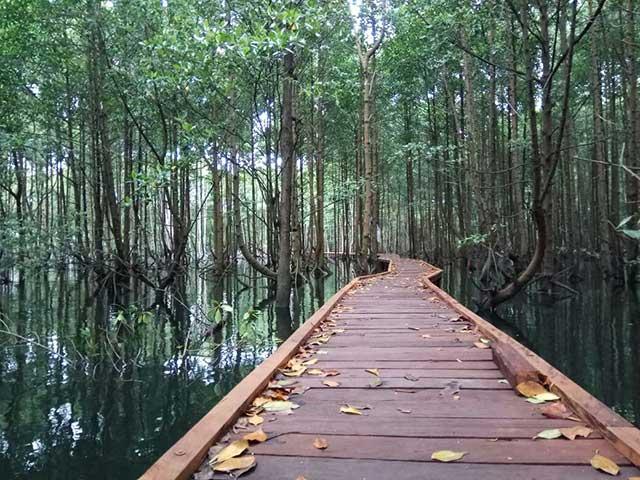 Taman Nasional Kutai