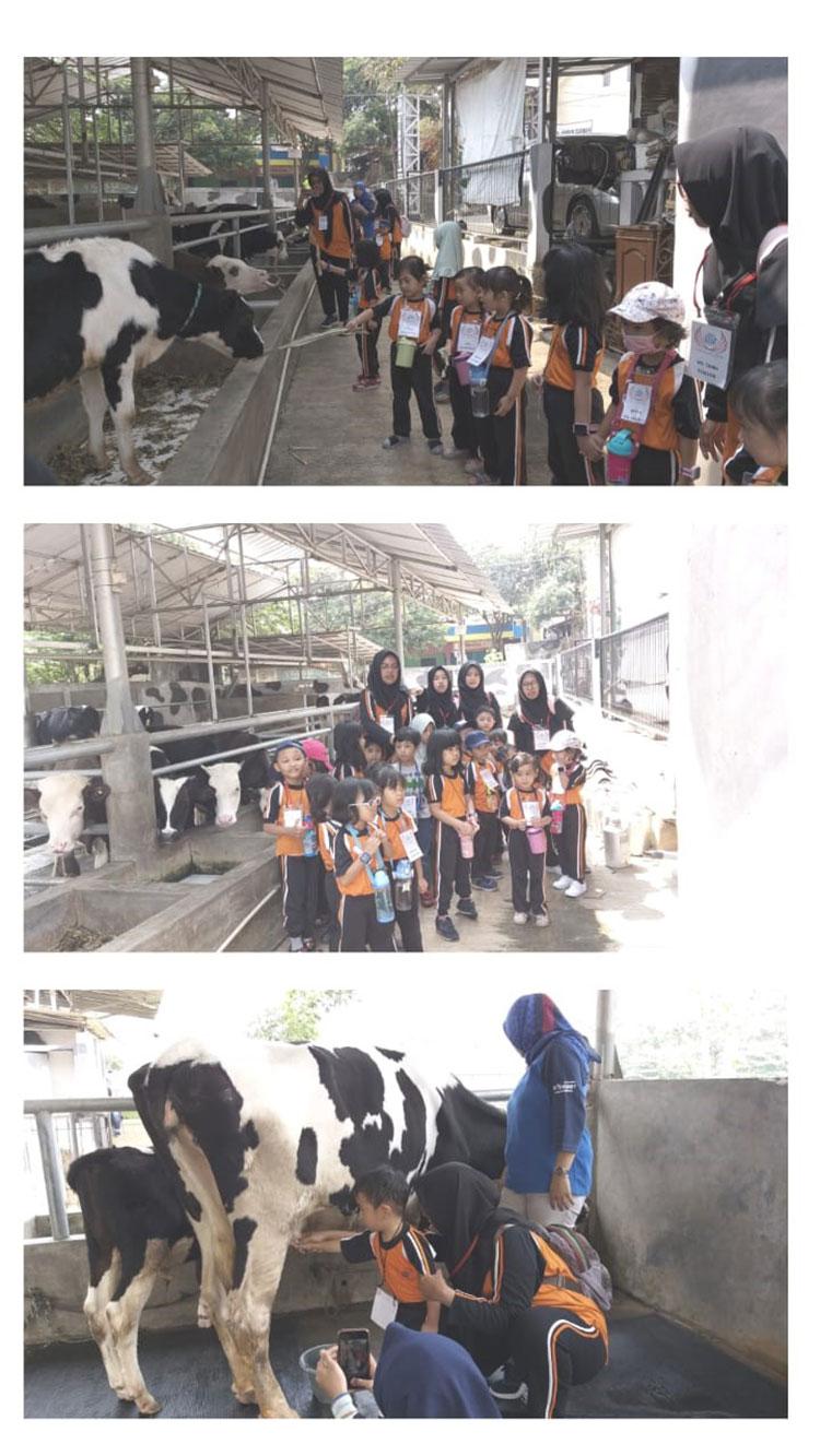 Wisata Agro Edukatif Istana Susu Cibugary
