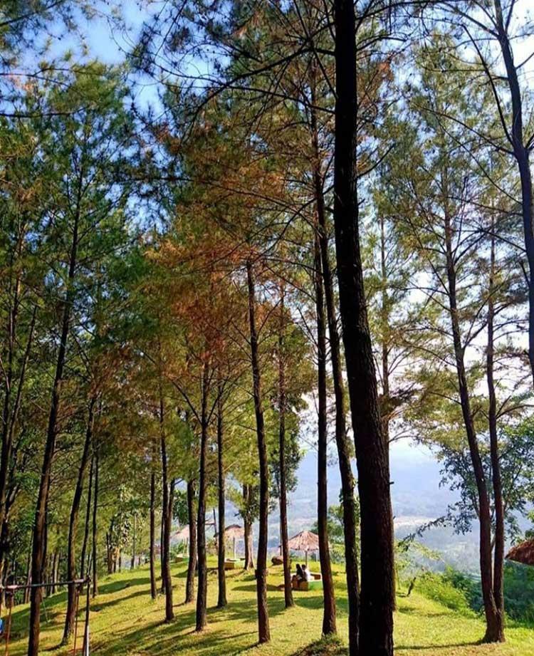 Wisata Hutan Desa Setianegara